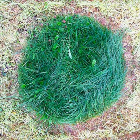 Dot grass